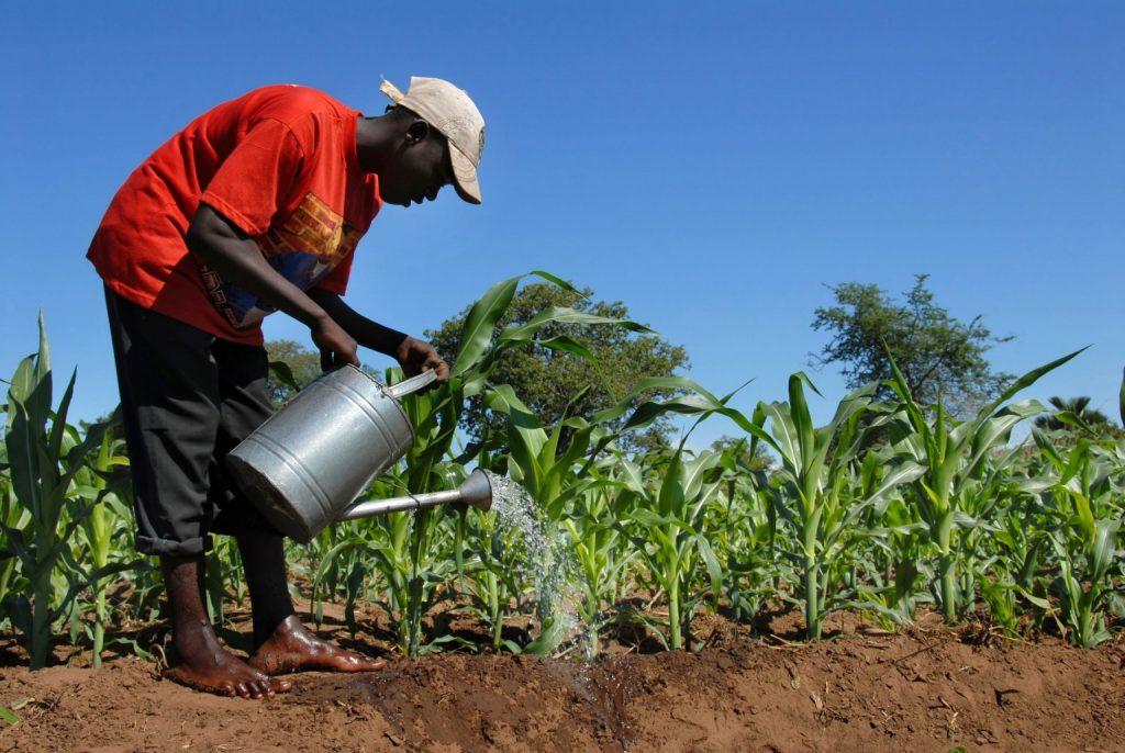 NIGERIA'S FIRST DIGITAL AGRICULTURE PLATFORM